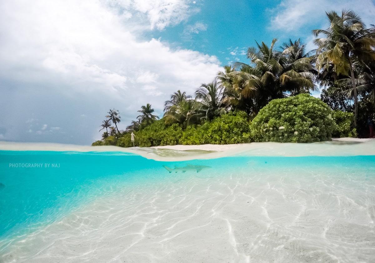 Maldives reef shark swimming off the beach